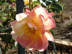 庭の花 015.JPG