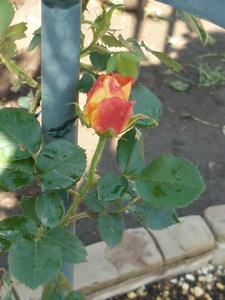 庭の花 020.JPG