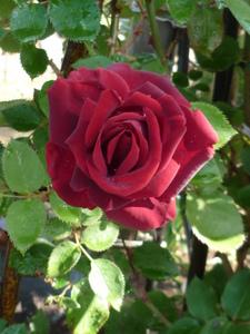 庭の花 024.JPG