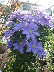 庭の花 027.JPG