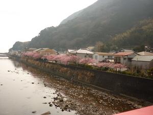 桜 046.JPG