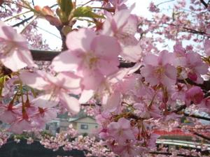 桜 049.JPG